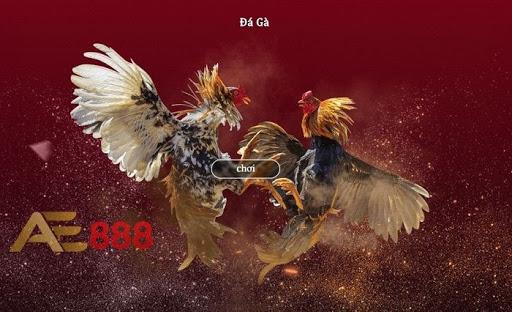 ae888 đá gà