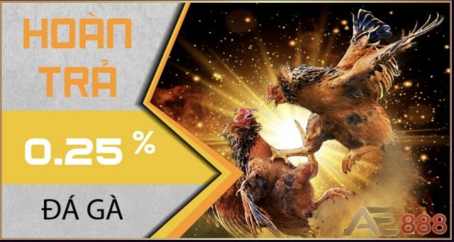 Tặng tiền thưởng cho người chơi khi giành chiến thắng liên tiếp tại cá cược đá gà AE3888